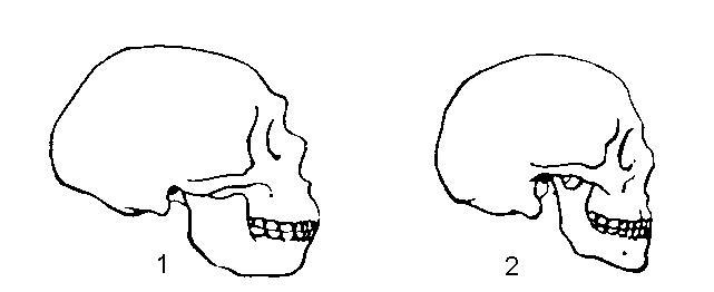 Контур черепа (вид сбоку)